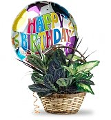Birthday Dish Garden With Mylar Balloon