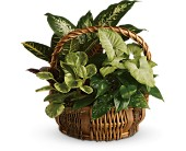 Fresh Live Garden Basket